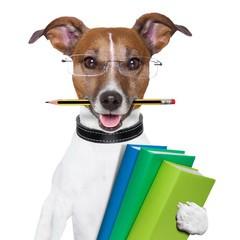 Bald verfügbar: Basis Seminar Tierkommunikation – Online
