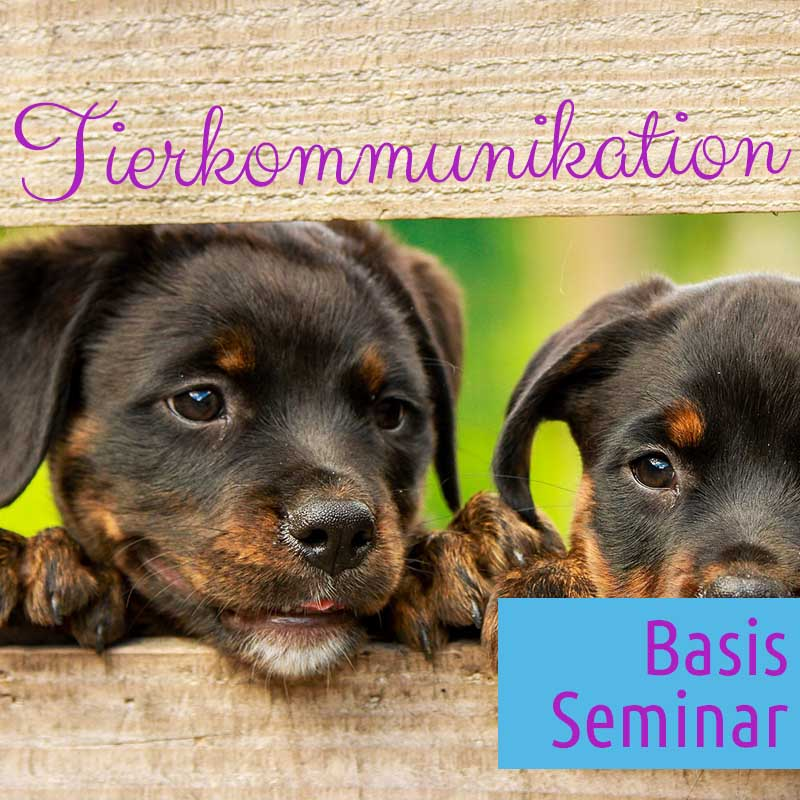 Basis Seminar Tierkommunikation in  83527 Haag