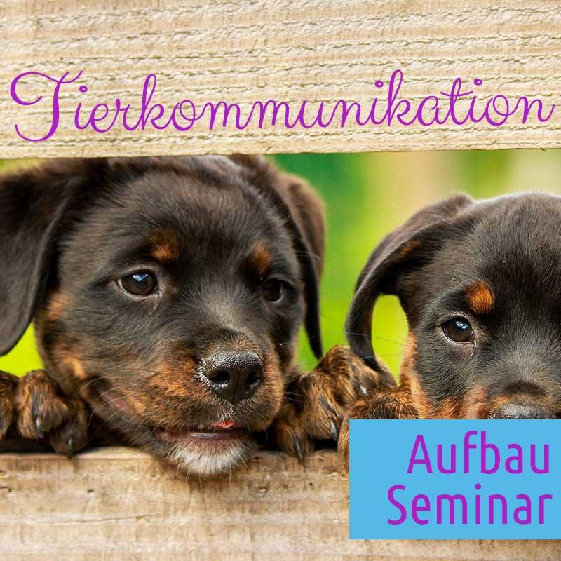 Aufbau Seminar Tierkommunikation in 83527 Haag