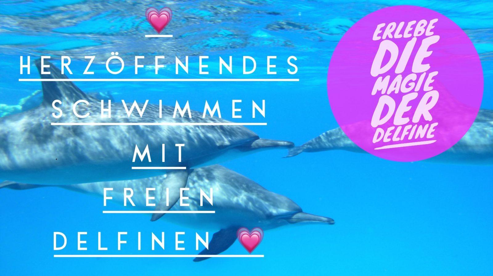 Magie der Delfine