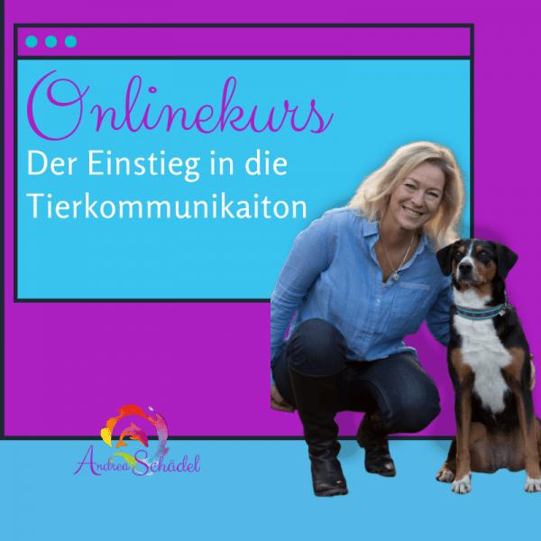 Bild Onlinekurs Einstieg in die Tierkommunikation