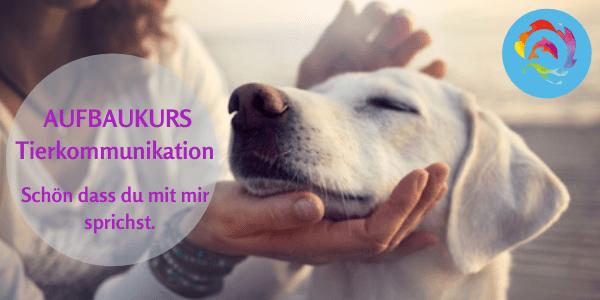 Bild Aufbaukurs 1 Tierkommunikation