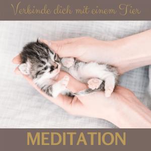 Meditation verbinde dich mit deinem Tier