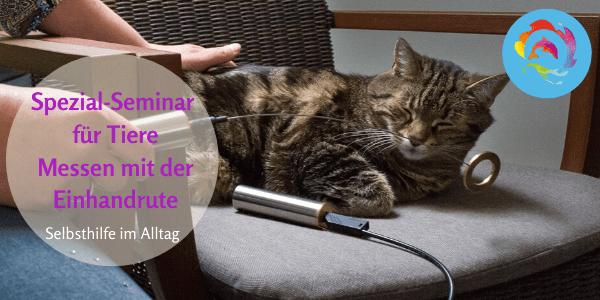Messen mit der Einhandrute Tiere