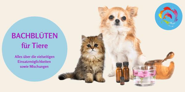 Online Seminar Bachblüten für Tiere